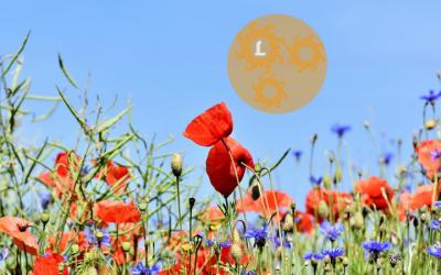 Puur natuur: een wilde bloemenwei in jouw tuin