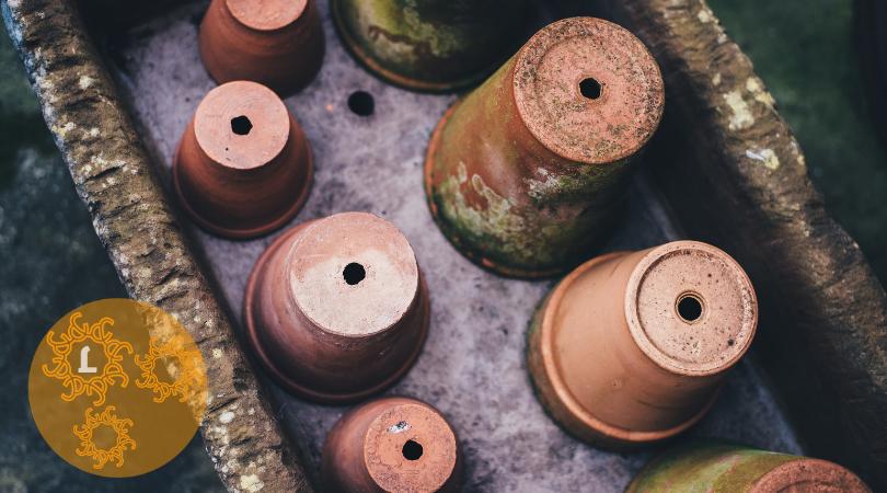 In een nieuwe pot: planten & verpotten
