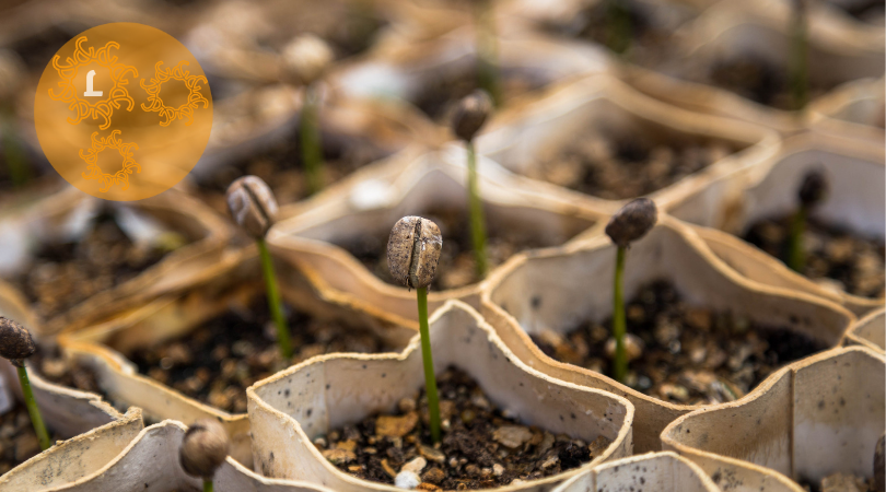 Zelf kweekpotjes maken: handig, duurzaam & voordelig