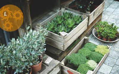 Een groene oase – ook op een paar m2