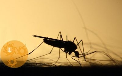 Muggen: natuurlijk te lijf