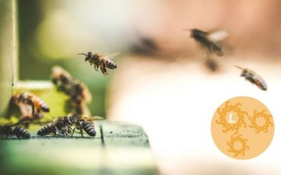 Wat een prachtig volk, de bijen