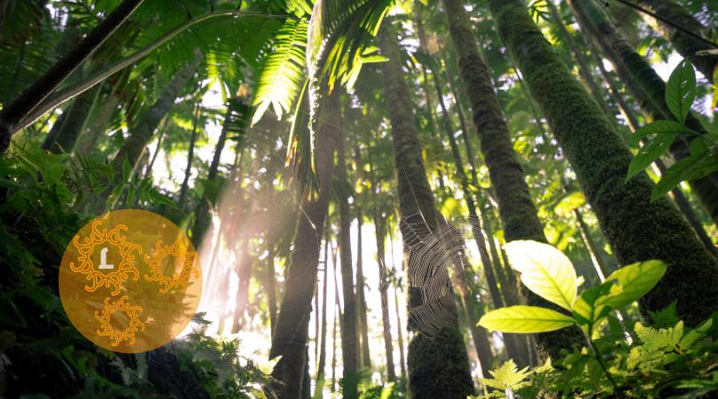Bomen planten door te internetten? Doe mee!