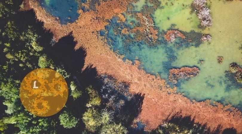22 mei: Wereldbiodiversiteitsdag