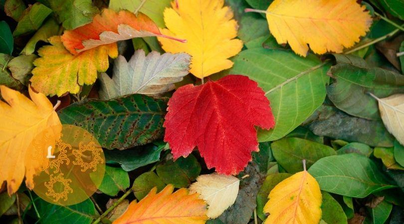 DIY: Van herfstblaadjes naar voedzame compost.