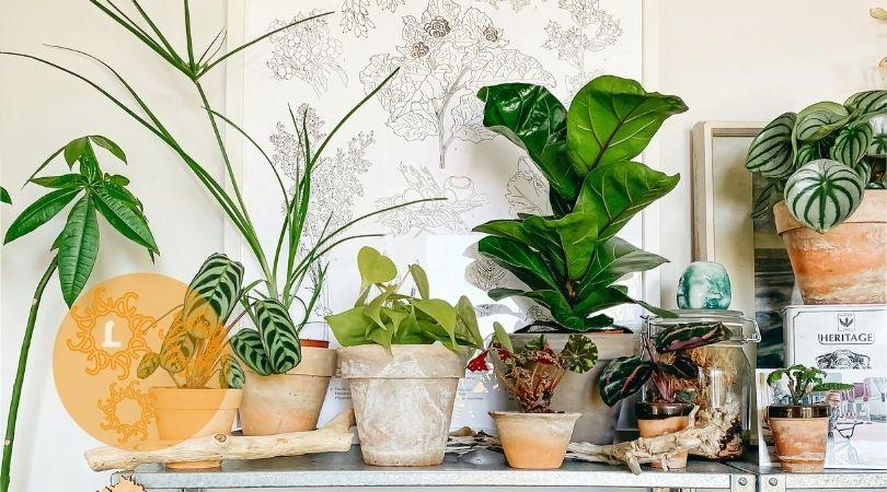 Kamerplanten: een boost voor je humeur en gezondheid