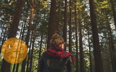 5 Inspirerende lessen die een boswandeling je geeft