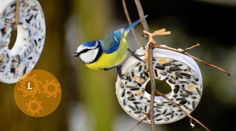 DIY: Vetbollen voor de vogeltjes