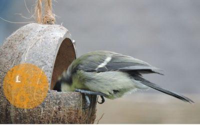 Winterhulp voor vogels