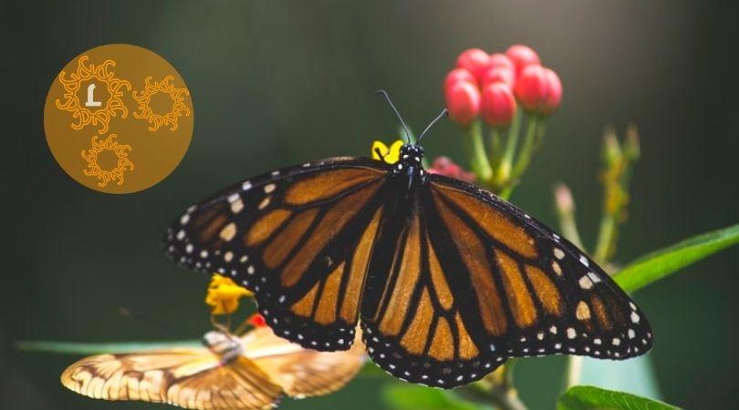 10 Tips voor meer vlinders in je tuin
