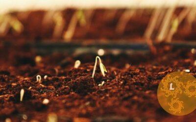De eerste keer tuinieren in de groentetuin