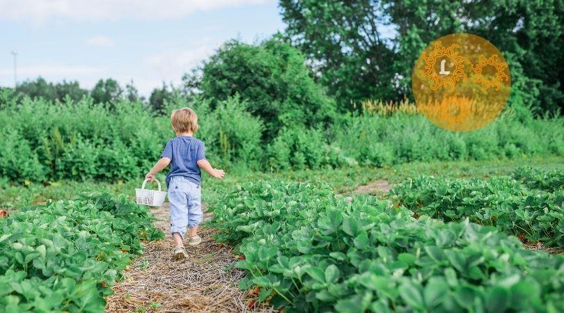 Tips om de biodiversiteit in je tuin te vergroten