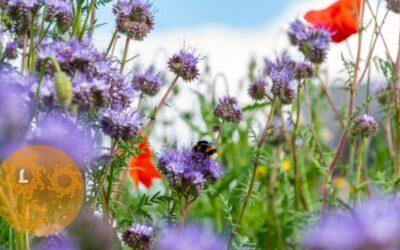 De bloemetjes en de bijtjes…