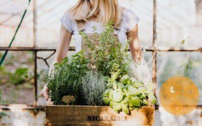 Leuk én handig: een kruidenspiraal aanleggen in jouw tuin.
