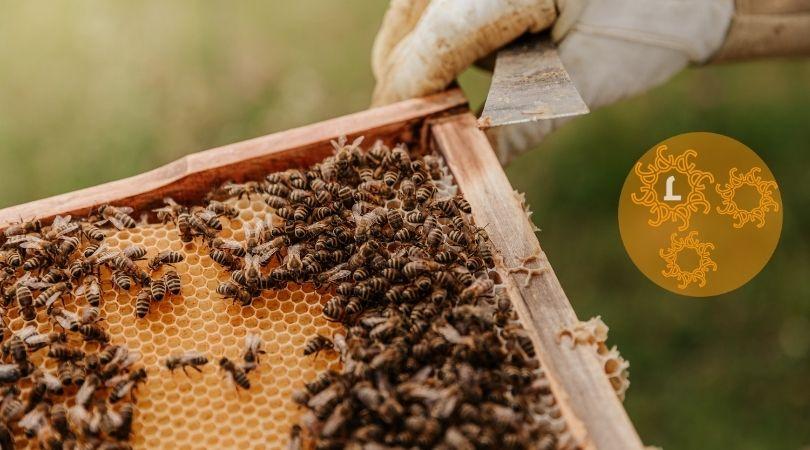 Prachtig bijenvolk